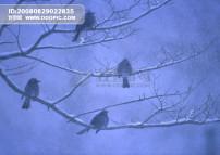 大自然/大自然树枝枝头鸟